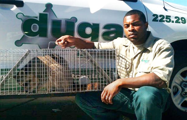 Dugas Pest Control provides humane wildlife trapping service in New Orleans and Baton Rouge Louisiana
